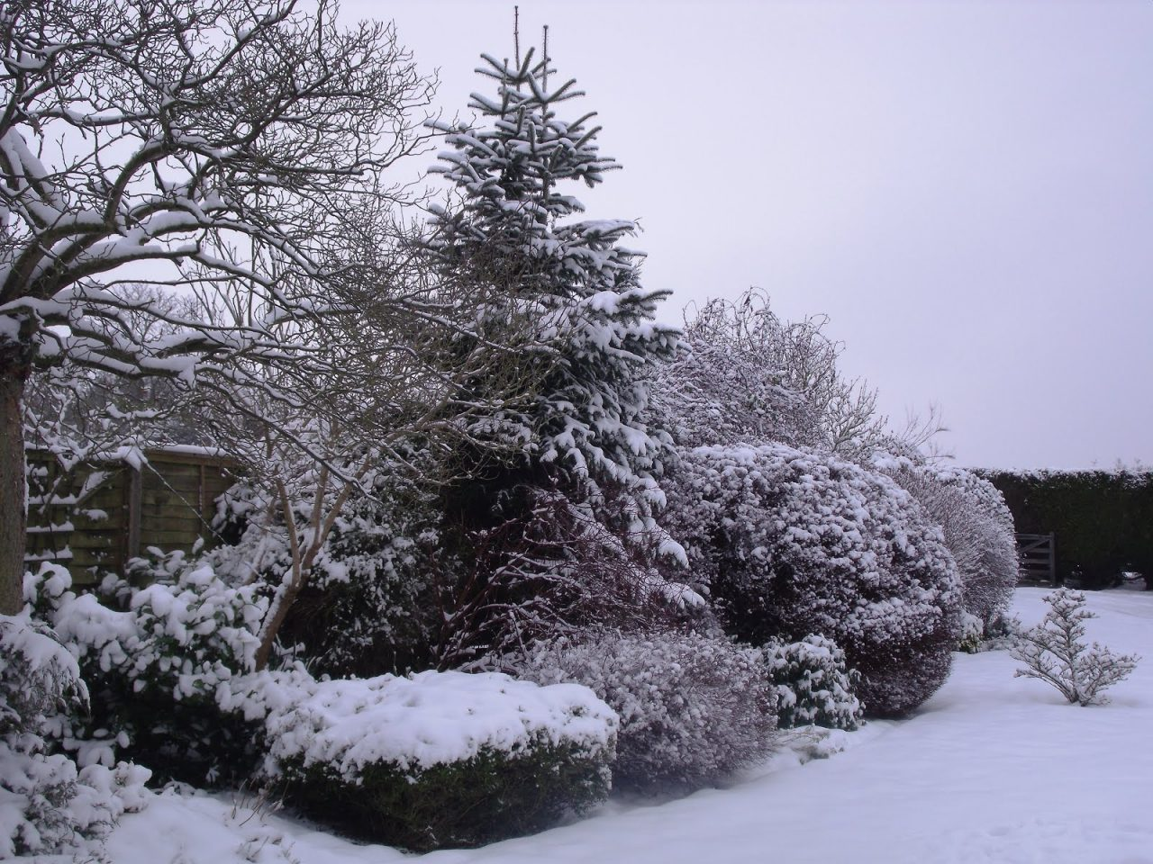 snow, maintenance, pruning, winter